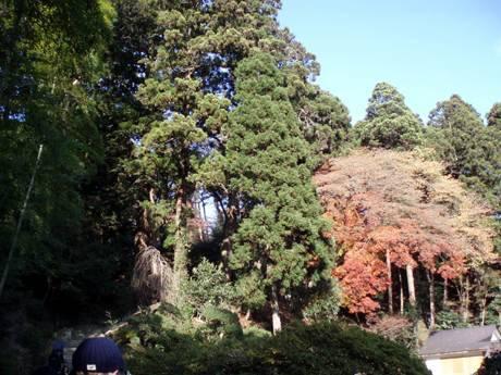 愛姫の森.jpg